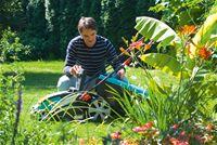 Jednoduchost z přírody: Vytvořte si vlastní hnojivo - Růže, Záhonky, Hnojení, Léto, Červenec