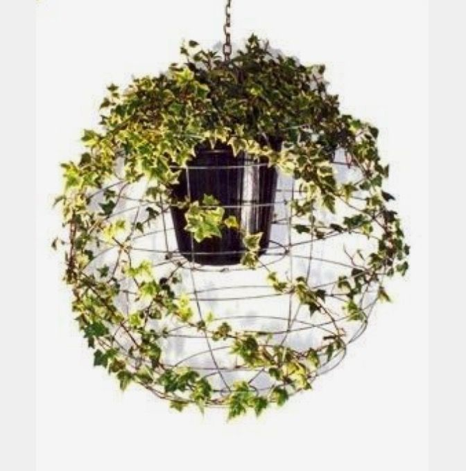 Use the frame from an inexpensive paper lantern to twine the ivy plant into a globe shape #Kokedamasideas