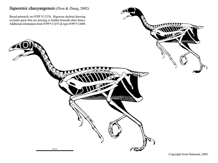 615 best Prehistoric images on Pinterest | Dinosaurs, Animal anatomy ...