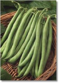 Bush Beans From Seed to Harvest