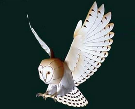 barn owl essays The four juveniles were between 41 and 50 days old, ranging from super-fluffy to  actually starting to look like a little barn owl – although all.