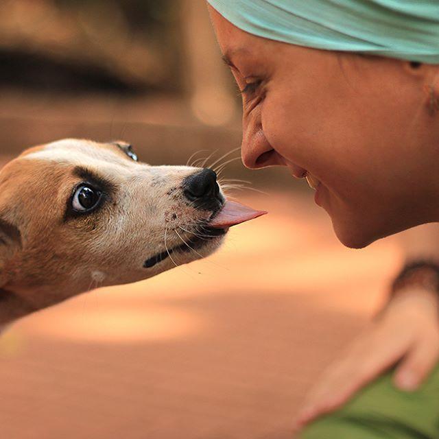 Когда глаза бояться, а язык так и тянется лизнуть белого человека )  #sunwhell #hellosunwhell #India #GOA #Arambol #Индия #ГОА #собака #dog   www.instagram.com/p/BCxOh6yqgO1/