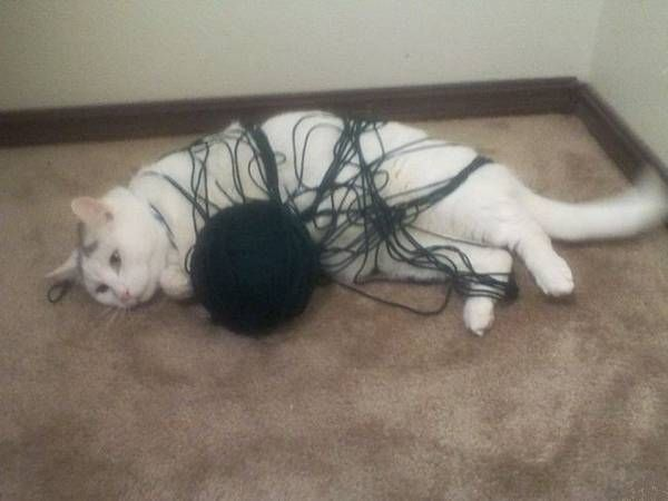 Чтобы кот был обездвижен