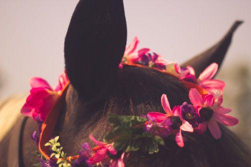 overidelaugh: rockin that homemade flower crown :P