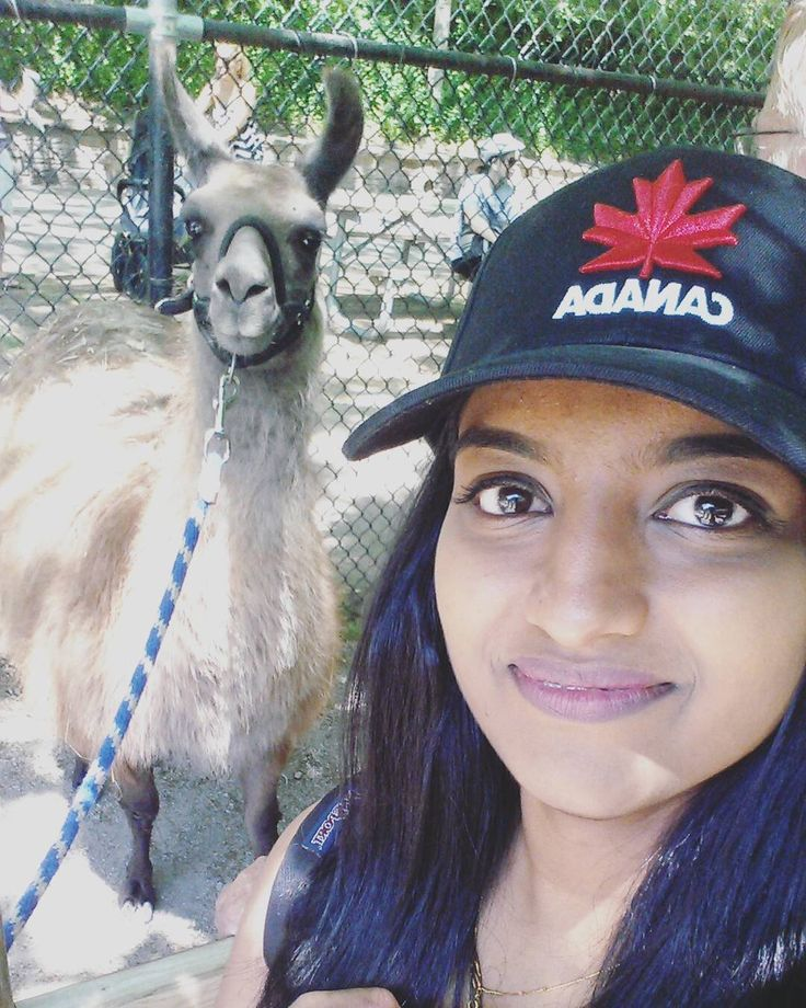Chilling with Emperor Kuzco~ I look so scared tho #deathglare #highpark #highparkzoo #theemperorsnewgroove #downtown #toronto #photography #zoo #llama #selfie