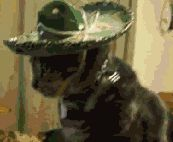 New party member! Tags: funny cat what cinco de mayo