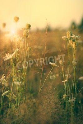 Uroda dzikie kwiaty na łące, tła środowiska na obrazach Redro. Najlepszej jakości fototapety, naklejki, obrazy, plakaty, poduszki. Chcesz ozdobić swój dom? Tylko z Redro