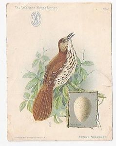 1899 Trade Card Singer Sewing Machine American Singer Series Brown Thrasher Bird | eBay