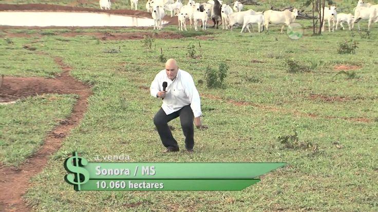 Fazenda á Venda em Sonora MS com 10.060 hectares