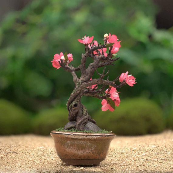 Miniature Cherry Blossom Bonsai