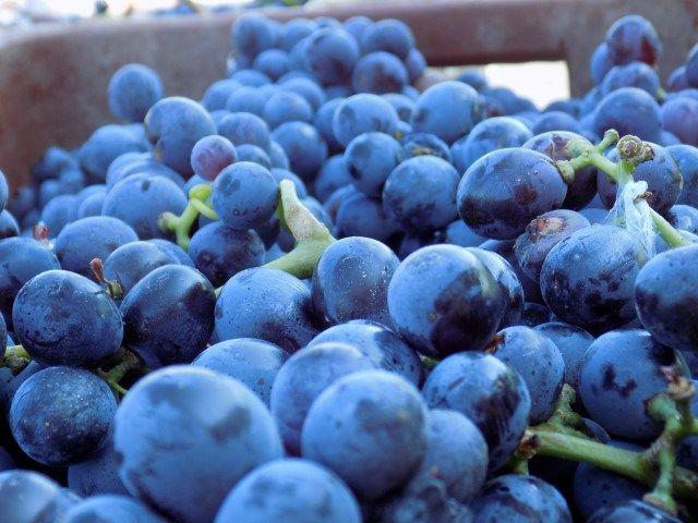 Wine Factory Kastelli Aug `16 (7) (Small)