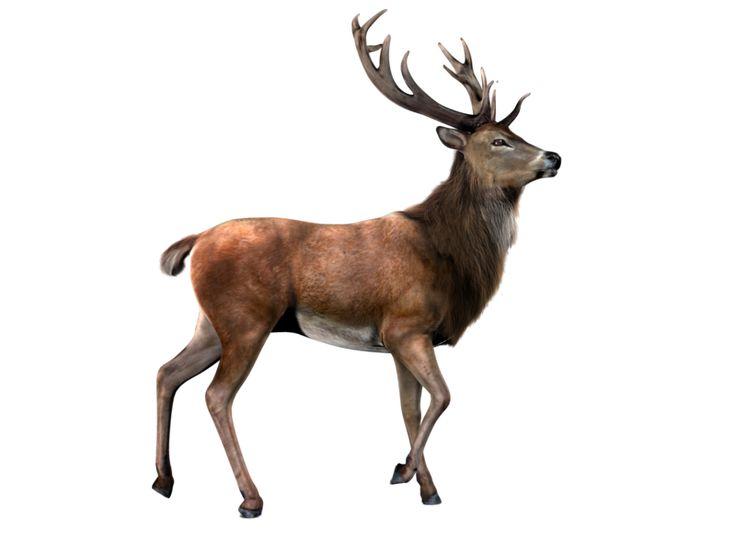 Elk PNG by LG-Design.deviantart.com on @deviantART