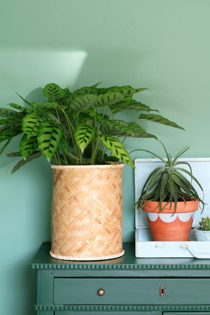 MY ATTIC SHOP / vintage basket / plants / greens / groen Photography: Marij Hessel www.entermyattic.com