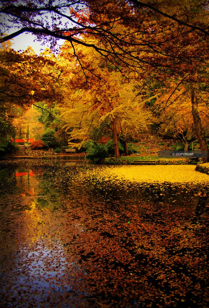 Late Fall Iphone Wallpaper 35 Best Autumn Beauty Images On Pinterest Autumn Trees