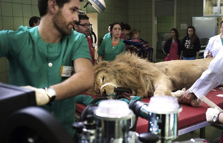 Leon Boiki pasando por el dentista