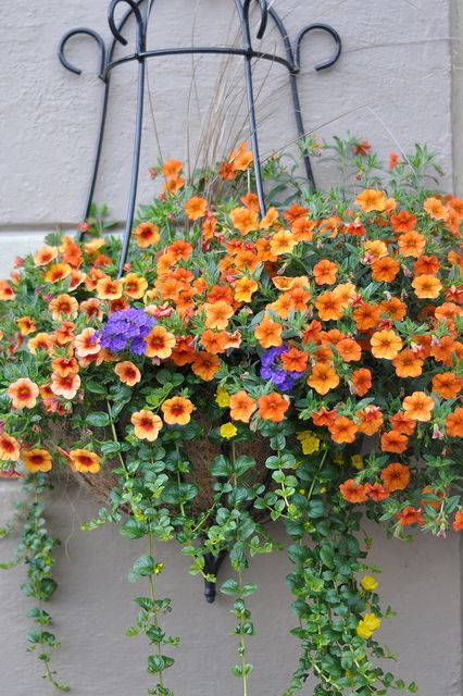 """Pinner says: """"Must have these this year: Calibrachoa 'Tanerine' Abundant, small petunia-like flowers Flowers all season Cascading growth Low maintenance Attracts Hummingbirds Deadheading Not Necessary Heat Tolerant Pet Friendly Semi-Trailing Habit Excellent in containers, flower beds and hanging baskets"""". I agree, they sound perfect for my deck..... so pretty!"""
