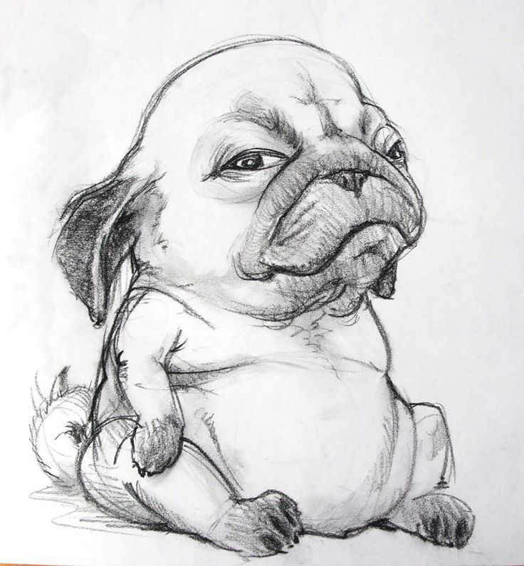 картинки как нарисовать собаку мопса октябре