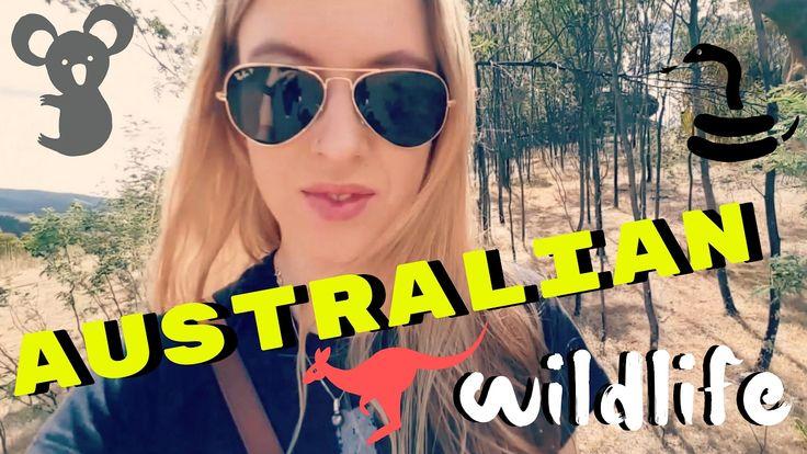 Australian Wildlife VLOG | Platypus, Koalas, even a Snake!