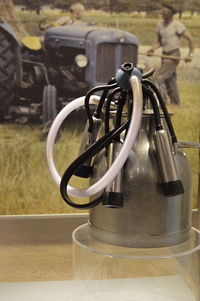 Lehmät määrittivät monen maaseudulla asuvan elämän rytmin. Lapset olivat jo varhain mukana  talon töissä. Luuppi, Oulu (Finland)