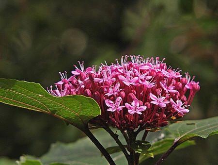Augustus bloeiende planten zoals eupatorium hemerocallis jacobskruidkruid bestrijden paarden