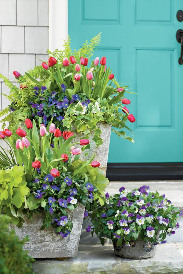 Pair your tulips with Lavender Blue' and 'Purple Wing' Plentifall pansies, acorus, heuchera, variegated ivy, and 'Tiger' fern (a selection of Boston fern).