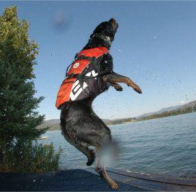 Product van de dag:  De EzyDog hondenzwemvest!  Verkrijgbaar in 4 verschillende kleuren, voor kleine en grote honden, voorzien van handvat en reflecterende strepen. Met deze stevige, verstelbare en stijlvolle zwemvesten stuurt u uw hond pas écht veilig het water in.  #honden,