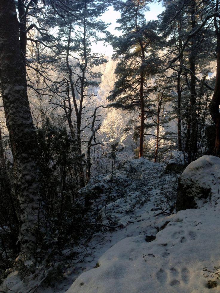 Villa Hiidenmäki conservation area