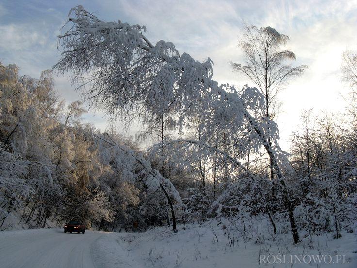 Bieszczady zimą 3