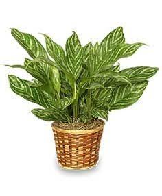 Best 25 plantas para sombra ideas on pinterest jard n - Plantas de sombra para jardin ...