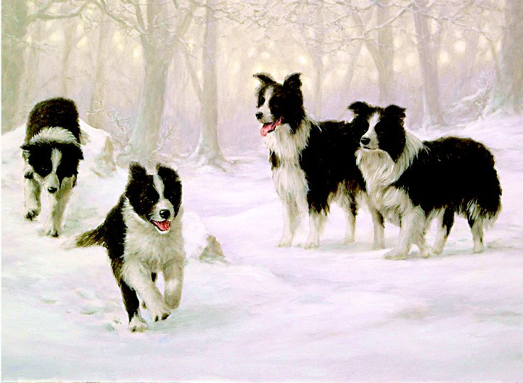 Winter Holiday - Border Collie Charity Christmas Card - John Silver Beautiful!!