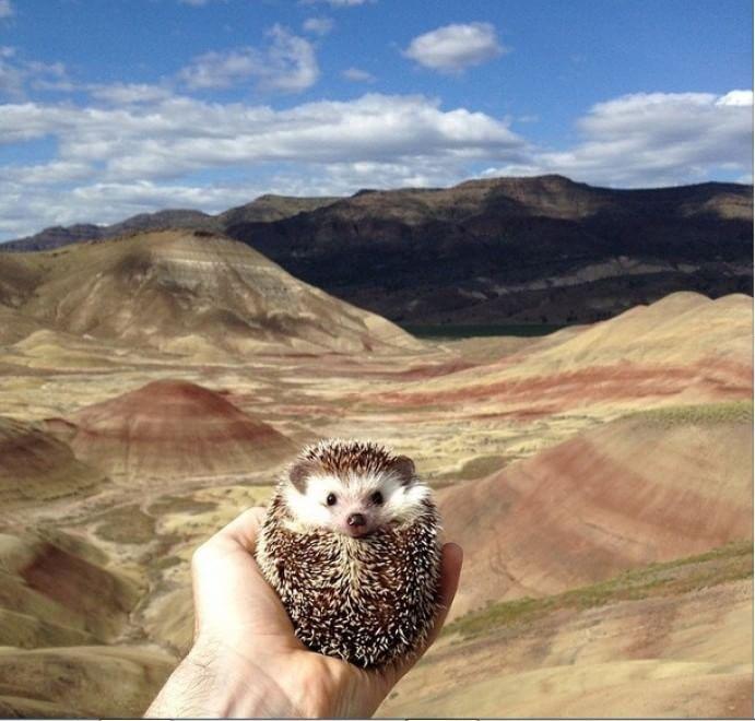 Visitare i luoghi più belli dell'Oregon in compagnia di Biddy, il riccio viaggiatore: l'intenzione di Toni DeWeese e Tom Unterseher è quella di permettere, a chi capita sul loro profilo  Instagram , di vivere tante avventure assieme al loro piccolo compagno. E cos&igr