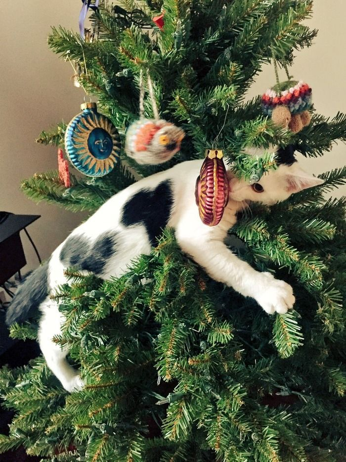 This could be my cat right now, just add some ornaments already tossed to the floor: