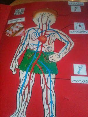 Lapbook sobre el aparato circulatorio