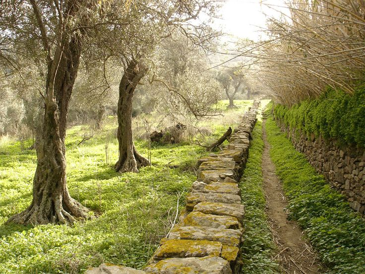 Old Paths, Tinos #mysteriousgreece