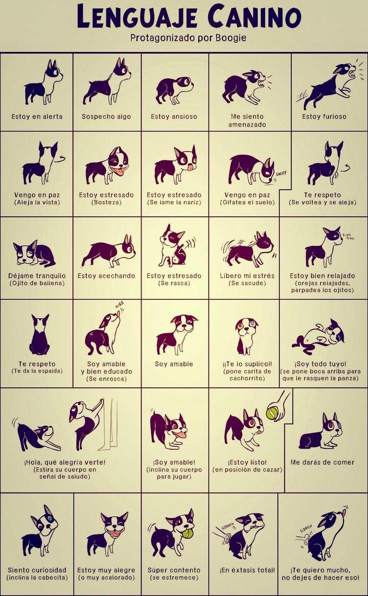 Lenguaje corporal perros Revista Ciencia
