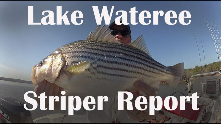 A striped bass video fishing report from... - https://northeast.skifflife.com/91886/a-striped-bass-video-fishing-report-from/