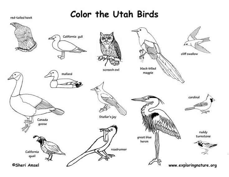 Utah Birds Look For Higher Resolution Printable Versions On  Coloingnature.org (free)