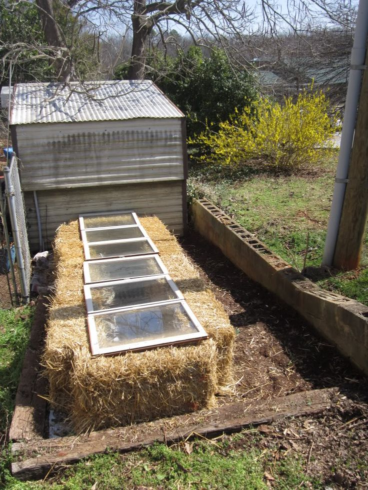 How to build a cheap cold frame in under 30 minutes with no tools? Straw bales and old windows.