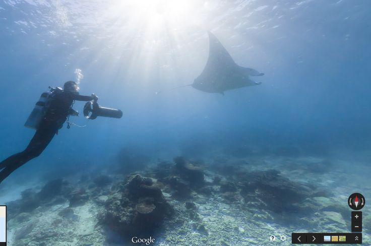 Lady Elliot Island Underwater