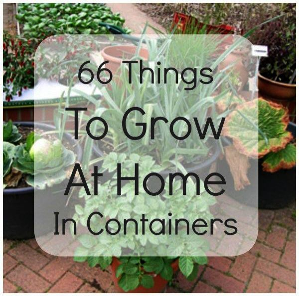 Choosing The Right Kind Of Mulch For Your Landscaping Container