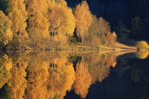 autumn reflection by Udo Dittmann