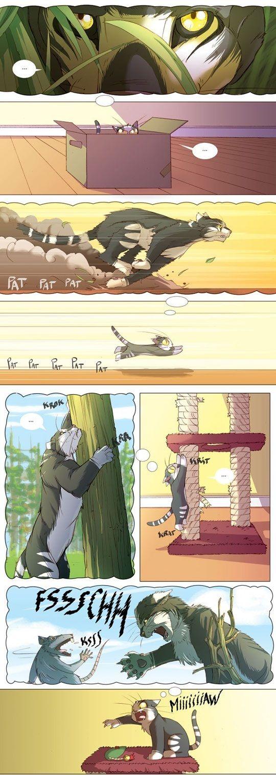 La imaginación de un gato