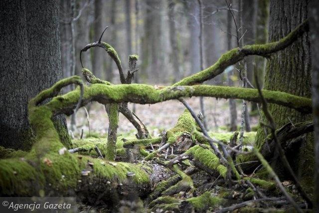 Fotosafari Wajraka - oko w oko z dzikim zwierzem. Lato w regionie