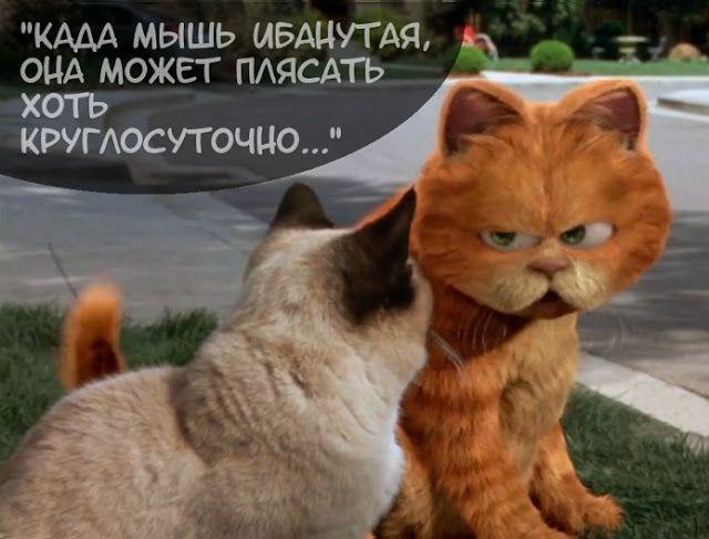 Блог Кота Моти.: Воскресная болтовня котовая