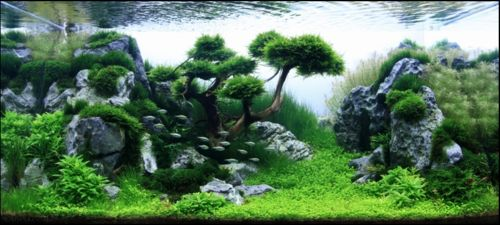1000 Images About Aquarium On Pinterest Fish Tanks Underwater And