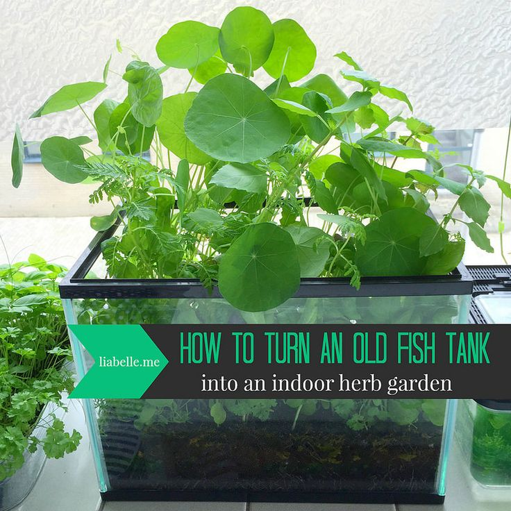 How to turn an old fish tank into an indoor herb garden #herbgardening #fishtank…