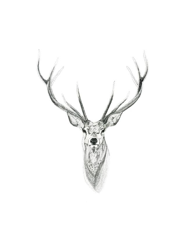 Stag No.1
