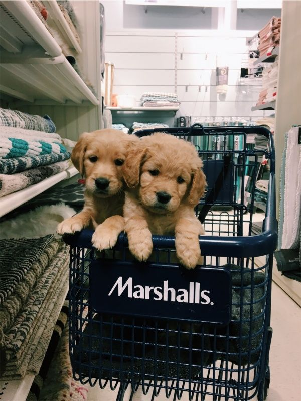 Two Puppies Puppy Dog Cute Brother Sister Shopping Cart Marshall S