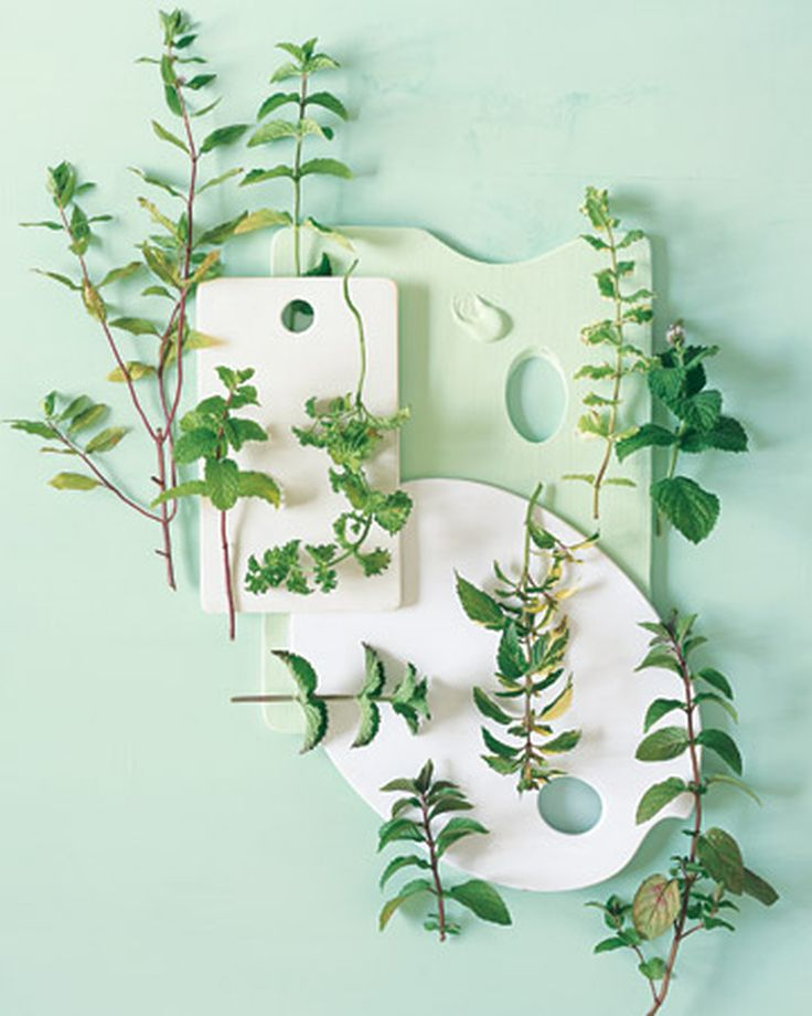 Indoor Herb Garden Tricks for the Most Lush Windowsill on the Block | Martha Stewart
