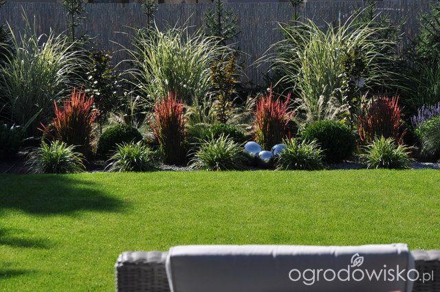 Lawendowy zawrót głowy - strona 835 - Forum ogrodnicze - Ogrodowisko